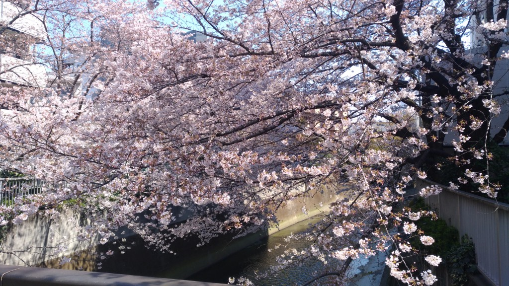 10 spots à Sakura à Tokyo