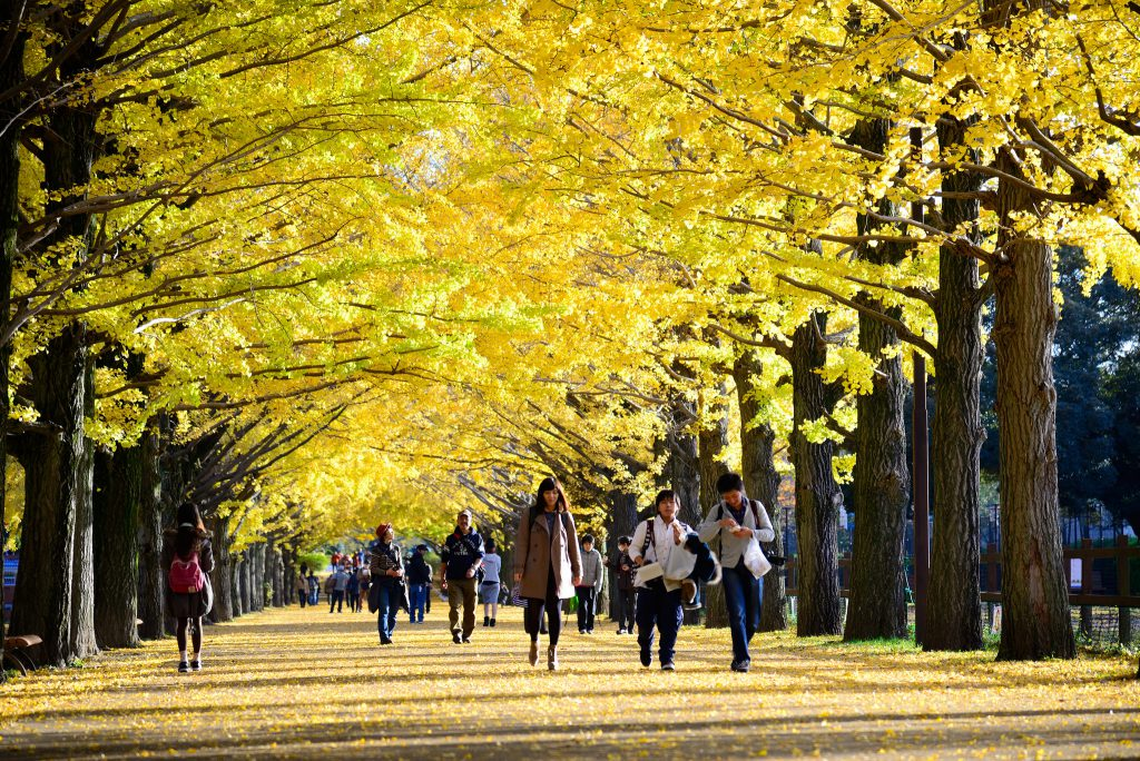 10 spots à Momiji à Tokyo et ses environs